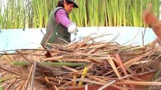 Peru: Women and Tara Trees against Land Degradation