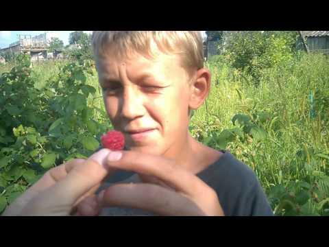 Вопрос: В чем особенности сорта малины Арбат?