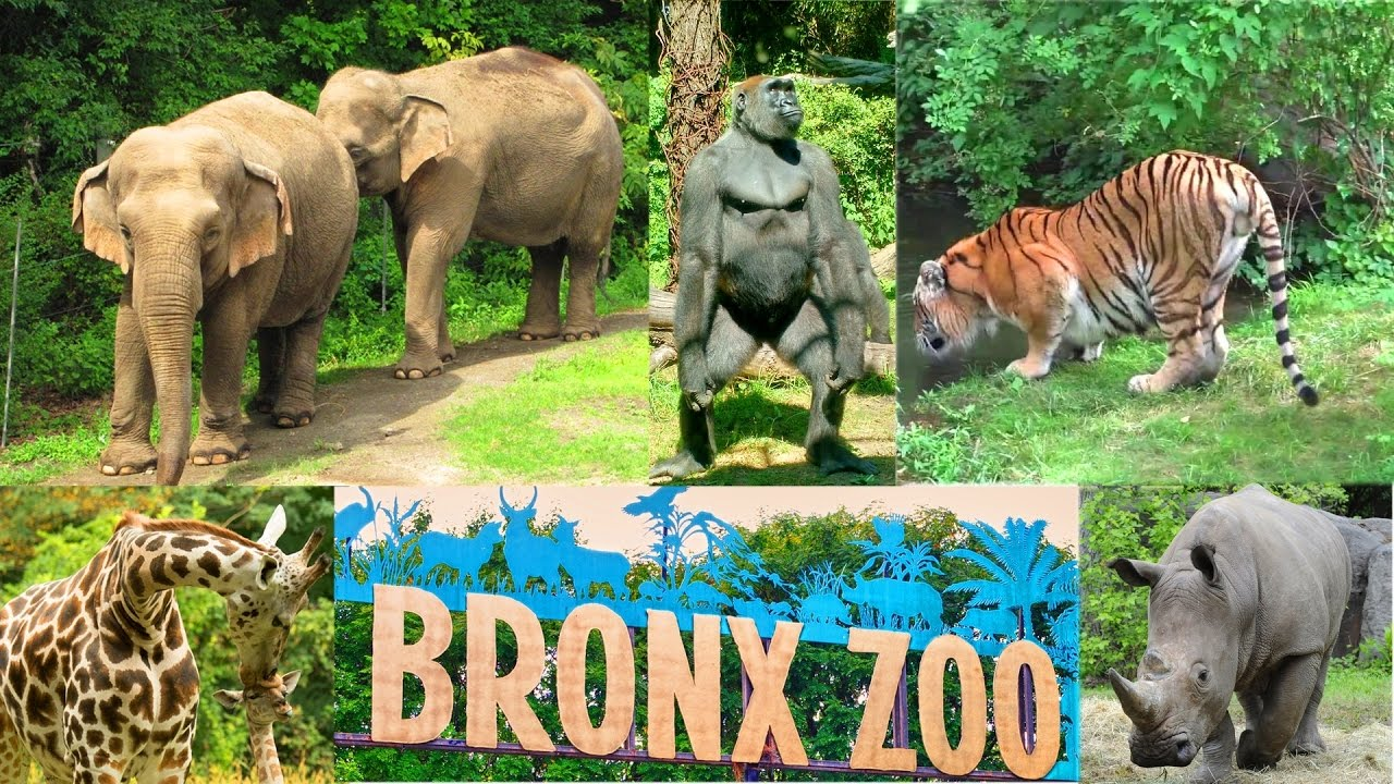 New York Bronx Zoo Wild Asia Monorail Ride Youtube