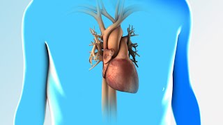 Heart Failure | Discharge Instructions | Nucleus Health
