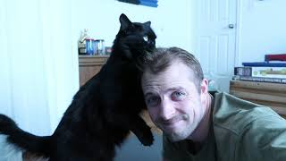 コール&マーマレード、猫たちの真実!アナタの飼い猫は憑依されているのかもしれない