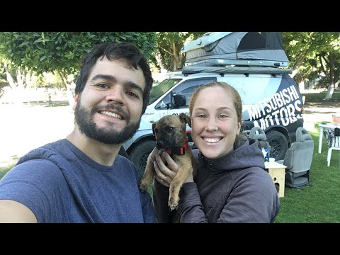 New Dog and New Van - Live from Mexico