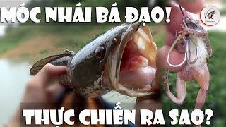 SnakeheadFishing Using Small Frog Bait - See How It Works In Real Life