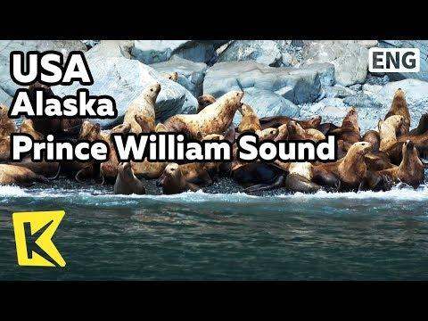 【K】USA Travel-Alaska[미국 여행-알래스카]프린스 윌리엄 해협 동물/Prince William Sound//Drift ice/Seal/Sea lion