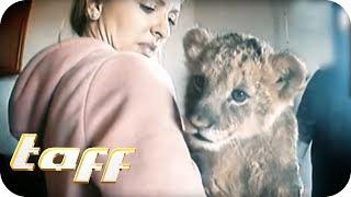 LÖWENBABY KAUFEN? Der Handel mit exotischen Wildtieren | taff | ProSieben