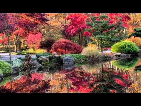 Gibbs Gardens --- Japanese Maples Colorfest