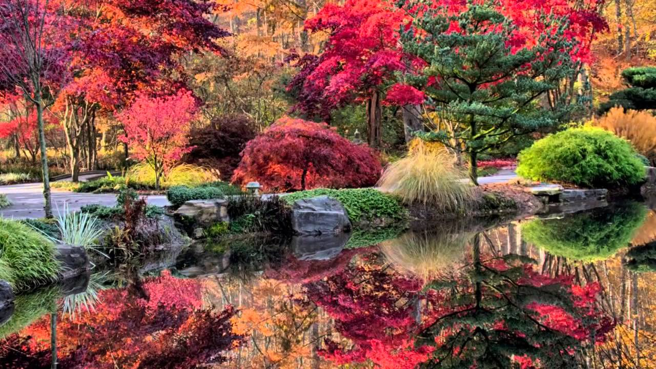 Gibbs Gardens Japanese Maples Colorfest Youtube