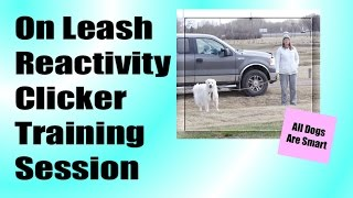 On-leash Reactivity Clicker Training Session (kuvasz)