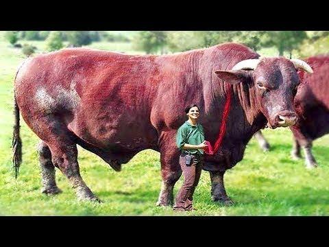 أغرب 10 حيوانات هجينة فى العالم , من صنع الإنسان .. !!