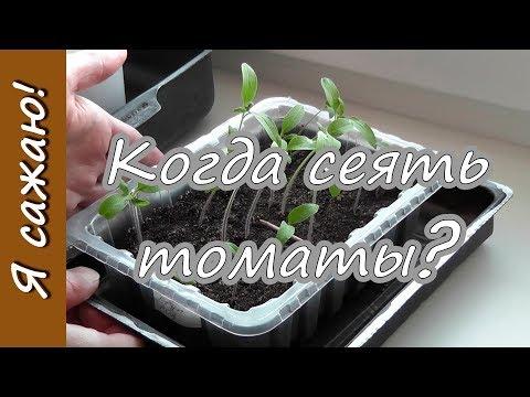 Когда сеять ПОМИДОРЫ на рассаду? Я сажаю. | помидоры | рассады | рассаду | рассада | посадка | томаты | сроков | сажать | расчет | сеять