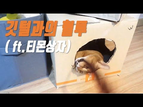 (아비시니안 고양이) 깃털과의 혈투 feat.티몬박스 (Abyssinian Cat Zeze)