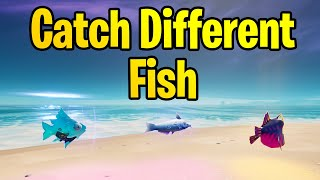 Catch different kinds of fish to find a Hearts Wild date for Fishstick - Fortnite Challenge Guide