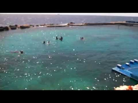 Curacao Dolphin academy in Willemstad Curacao