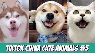TikTok | China Cute Animals Compilation 2019 #5