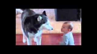 Videos Engraçados de crianças com animais na internet