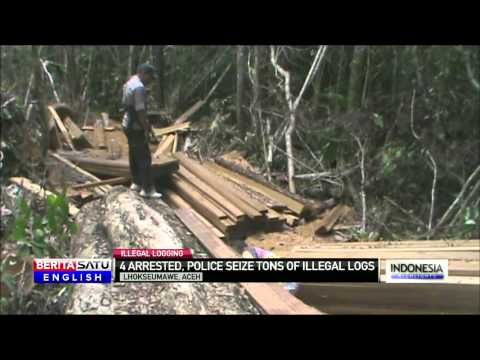 Aceh Police Bust Illegal Loggers Outside Lhokseumawe