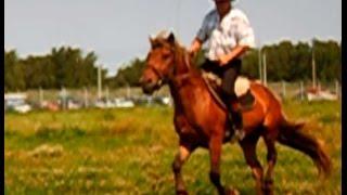 Фотосессия с лошадьми в Москве / 8(916)702-11-08 - Прогулка на лошадях