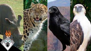 10 حيوانات سوف تنقرض قريباً