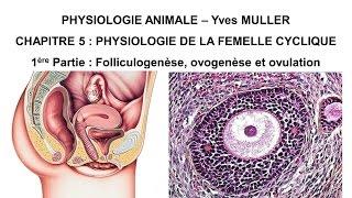 Chapitre 5-1 Follicule ovarien, ovogenèse, ovulation et corps jaune