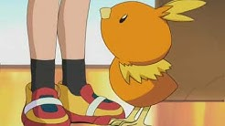 Torchic Moments