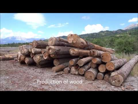 Why is forestry important? sustainable renewable carbon capture & agroforestry