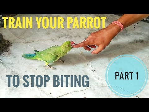 Part 1 - How To Train A Parrot To  STOP BITING || REASONS AND SYMPTOMS Of Biting -EXPLAINED ||
