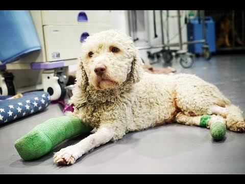 Dog with terrible injury RECEIVES AMAZING TREATMENT and everything changes