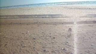 Plage des Gollandières au Bois plage en Ré