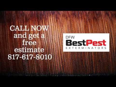 Best Moth Control in Grand Prairie Tx | 817-617-8010 | FREE ESTIMATES