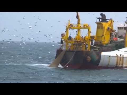 'Supertrawlers' clip from 'Atlantic'