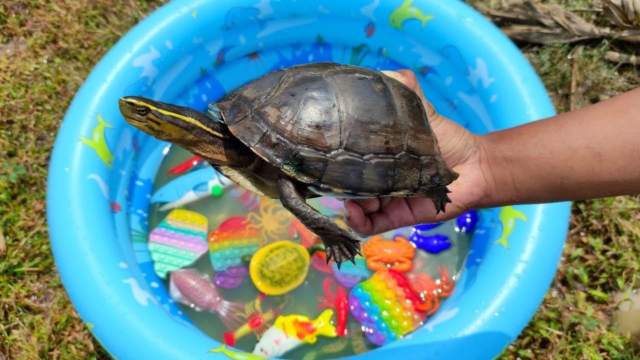 Menyelamatkan Ikan Mas, Bebek, Angsa, Ikan Hiu, Kura-Kura Asli, Penyu, Cumi, Pop it, Kepiting #102