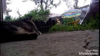 Помогите!!!Котятам...(Котята в беде их поймали живодёры. Их мама не знает ,что делать? Но нашёлся тот кто помог и счастье, ура!!!, 2016-06-26T14:55:29.000Z)