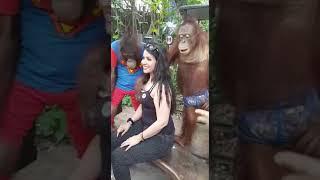 Gorila sex beauty lady