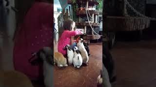 Контактный зоопарк в Сочи