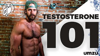 Testosterone 101: How To Increase Testosterone, LH, and FSH