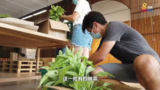 改造旧校址成农场 社会企业种菜送医院职员