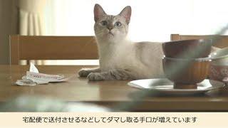 にゃんこシリーズ第2弾(VSハガキにゃ!)