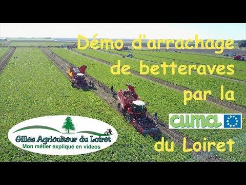 Démo d'arrachage de betteraves par la Cuma du Loiret