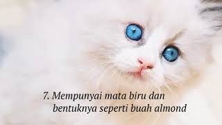 10 Ciri-ciri Kucing Anggora