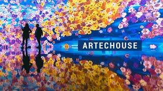 Artechouse DC - 'In Peak Bloom'