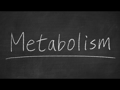 Do You Have a Slow or Fast Metabolism? Here's How to Calculate Your Metabolic Score