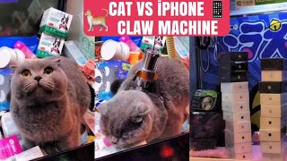 CAT VS iPHONE  | VIDEO REACTION