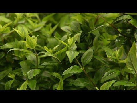 Low Maintenance Landscape Plants - Family Plot