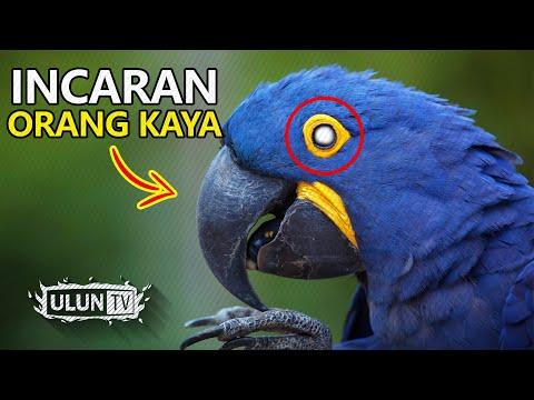 INCARAN ORANG KAYA! 5 Jenis Burung Termahal Di Dunia