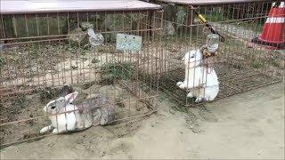 看板ウサギ(淡路島牧場案内事務所)