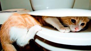 Кошки Купаются в Унитазе - Кошки Падают на Унитаз - Кошки и Унитаз