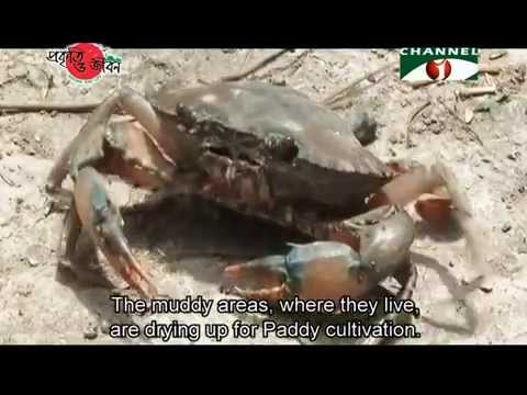 Nature and Life - Episode 156 (Crabs of Bangladesh)