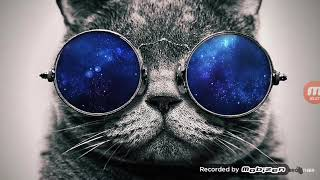 Крутая музыка кот в очках