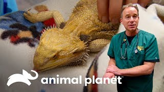 3 Sorprendentes urgencias de mascotas inusuales | Dr. Jeff, Veterinario | Animal Planet