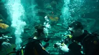 Diving With Sharks At Blue Planet Aquarium  - 17th March 2013